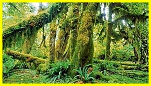 Pengertian Botani Dalam Biologi